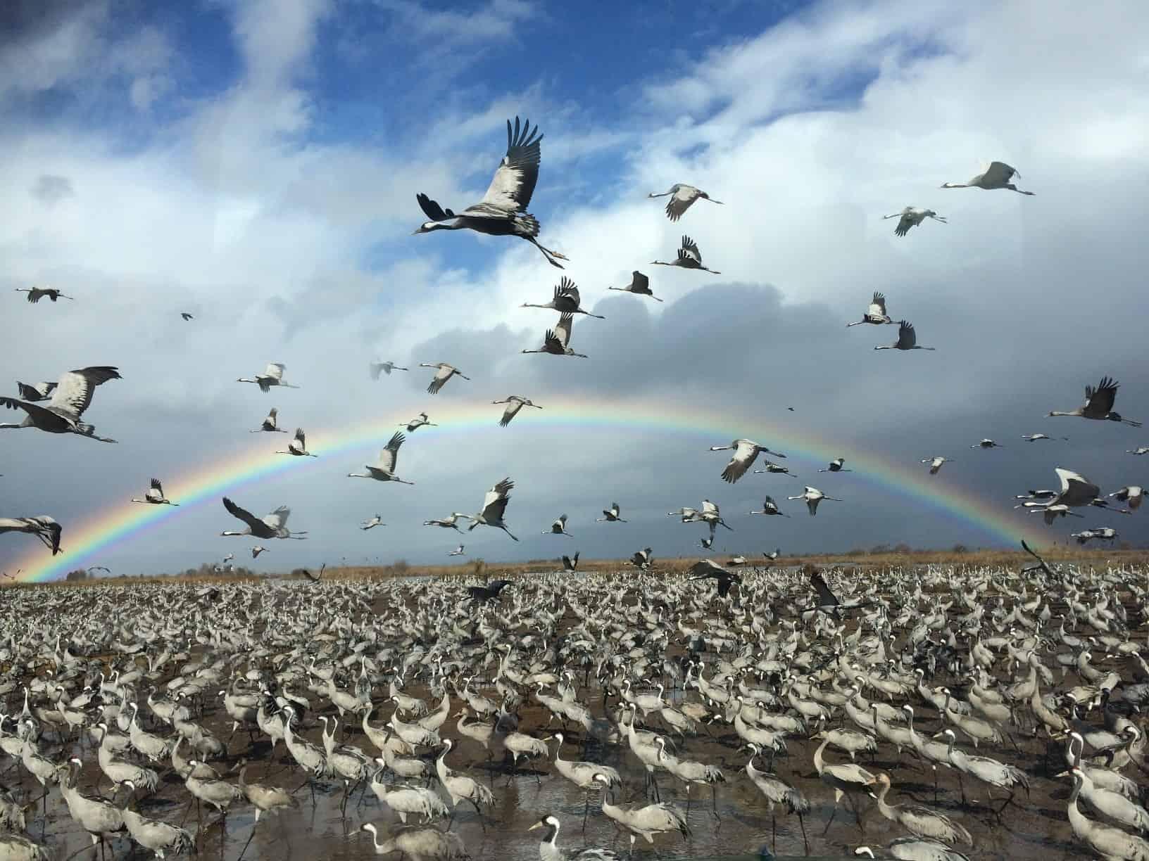 גליליון_לעוף עם הטבע_צילום- עינבר אלדר